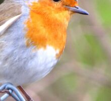 Robin Perching On Wire Fence Sticker