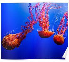 Peaceful Ocean Jellyfish Poster