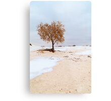 White Sands Lone Tree Metal Print
