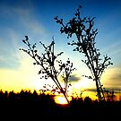 Twilight Silhouettes by ©The Creative  Minds
