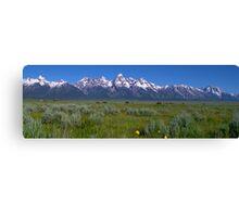 Grand Teton Bison panorama Canvas Print