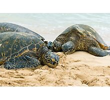 Green Sea Turtles Photographic Print