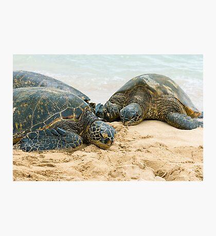 Green Sea Turtles Photographic Print