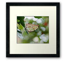 Malachite Butterfly Framed Print