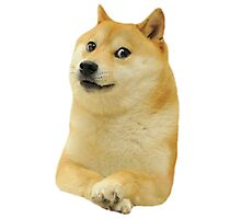 Doge design. Photographic Print