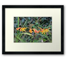 The Wild Blooms Framed Print