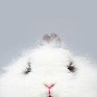 grumpy rabbit   bunny nose snob fluffy jersey wooly angora dwarf funny binky grey white cute animal eyes by lauren elizabeth