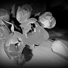 Tulips in Grey by Fara