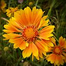 Shining Bright from A Gardener's Notebook by Douglas E.  Welch