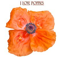 I Love Poppies by Thomas Young