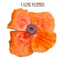 I Love Poppies Photographic Print