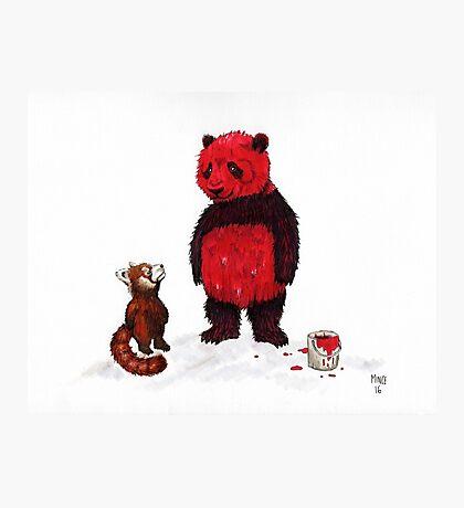 Red Pandas Photographic Print