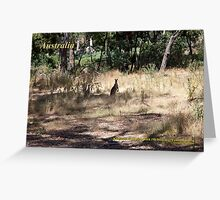 Kangaroos - Hanging Rock, Victoria Greeting Card
