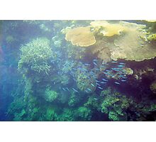 Great Barrier Reef Photographic Print