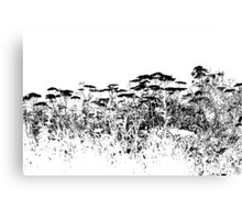 A Field Of Wild Cow Parsnip  Canvas Print