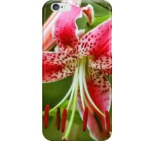 Stargazer lily in white, red  & pink iPhone Case/Skin