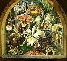 GARDEN WINDOW by Tammera