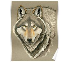 Grey Wolf Portrait Poster