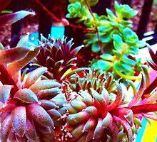 Rainbow Succulents by sammeiler