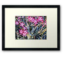 Impala Lily, Malawi Framed Print