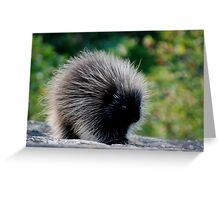Young Porcupine Greeting Card