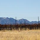 Sonoita Mtn View by Judi FitzPatrick