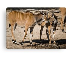 Animal Affection Canvas Print