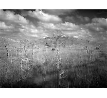 Sawgrass prairie and Cypress Island Photographic Print
