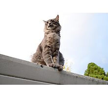 Literally a cat! Photographic Print