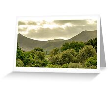 South African Vineyard  Greeting Card