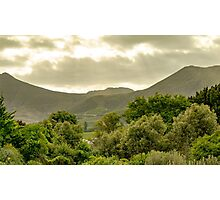 South African Vineyard  Photographic Print