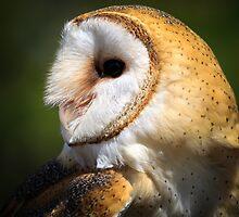 Barn owl by chris2766