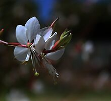 Pretty flower with bokeh  by myraj