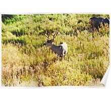 Deer Buck Poster