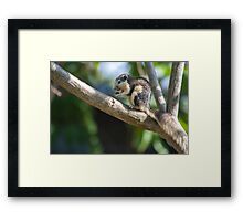 The Cause of Distraction Framed Print