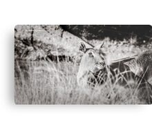 black and white portrait of an innocent doe Metal Print