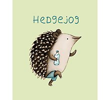 Hedgejog Photographic Print