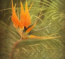 Bird of Paradise #3 by Elaine Teague