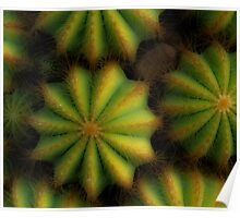 Soft cactus Poster