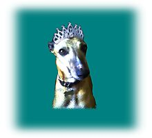 Comedy whippet in teal Photographic Print