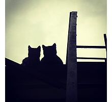 A silhouette of two kittens on the roof Photographic Print