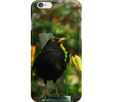 A blackbird holding insects in its beak against a green background iPhone Case/Skin