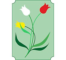 Tulips in 3 colors Photographic Print