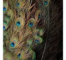 Peacock #1 Photographic Print