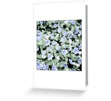 Veronica Flowers Floral Photo  Greeting Card
