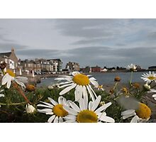 Daisies on a dock Photographic Print