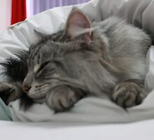 Cat Nap by MPJPhotography