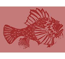 THE REDSCORPION FISH  (red on rose) Photographic Print