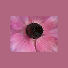 flowers in pink by paula cattermole artinapuddle