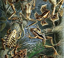 Historical painting of frogs by franceslewis